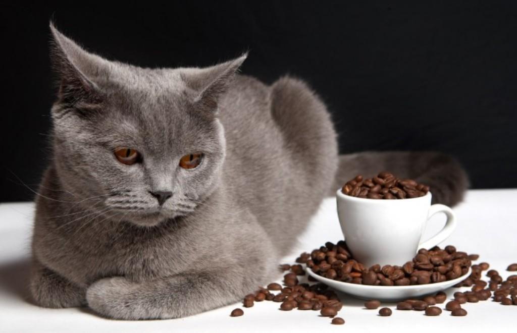 Коты также не любят кофе и если ваш питомец, справил свою нужду не в положенном месте, то после того как вы уберете и вымоете это место, посыпьте его спитым кофе