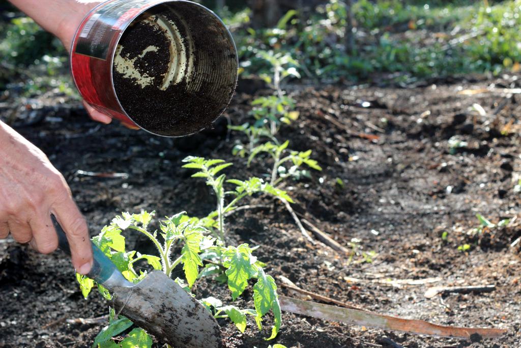 В жмыхе нет химических примесей, его полезные свойства улучшают структуру почвы, а аромат отпугивает садовых вредителей