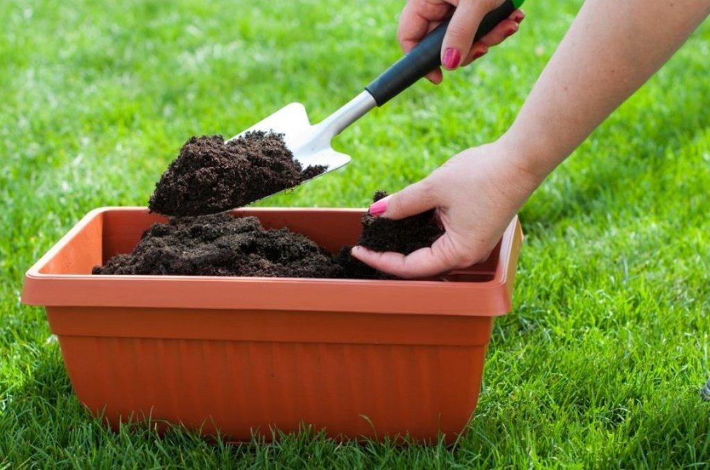 Кофейный жмых как удобрение – это достойный метод использования органических отходов для подкормки огородных растений
