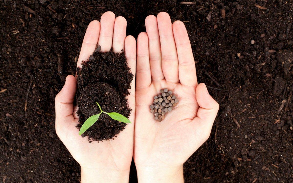Больше всего кофейный жмых любят редис и морковь, так как кофе как удобрение способствует их росту
