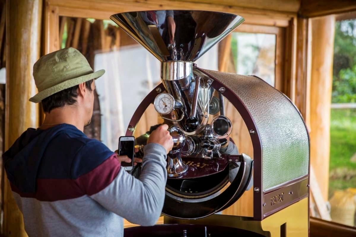 Влажность зеленого кофейного зерна