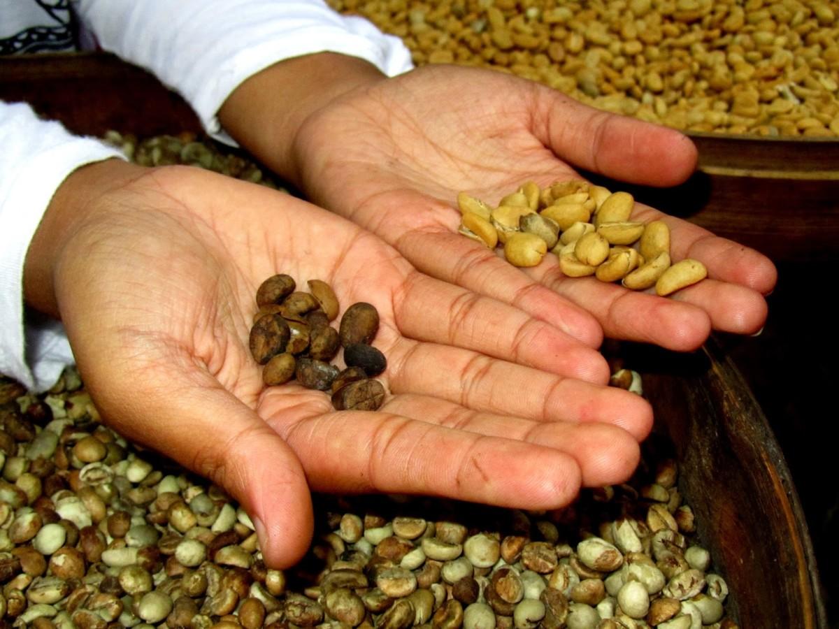 Carte noire изготавливает кофе всех форматов: от зерен до пакетиков