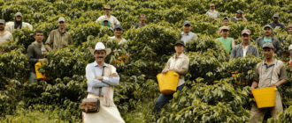 Плантации кофе и работники