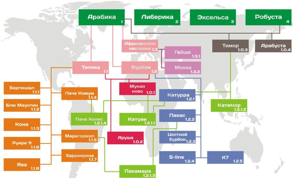 Карта произрастания кофе разных сортов