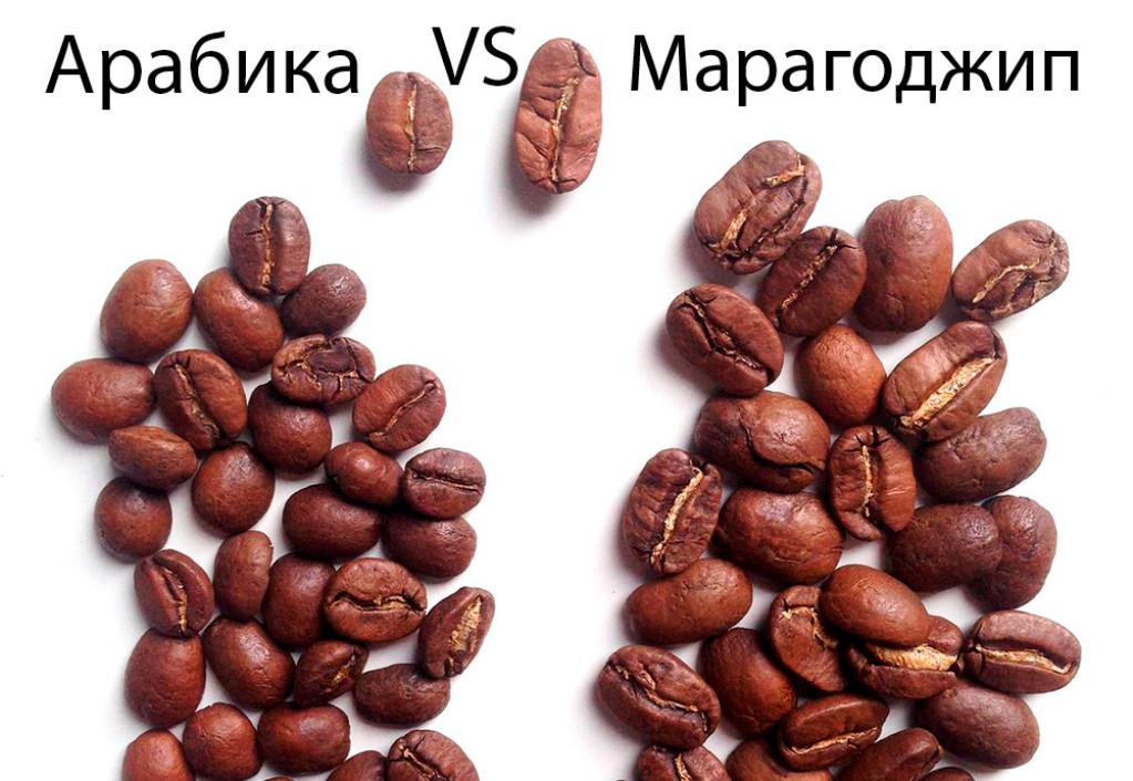 Сравнение внешнего вида Арабики и Марагоджип