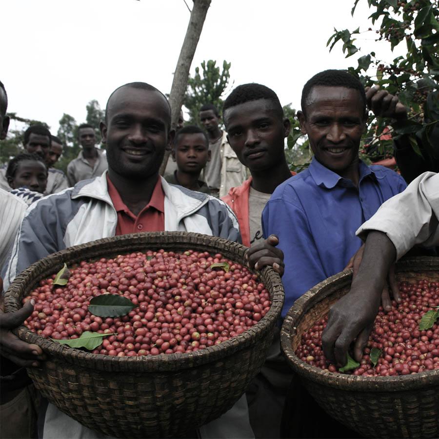 собиратели кофейных зерен с плетеными корзинами
